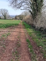 Footpath along a field
